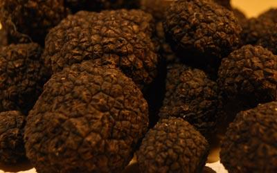 Sustainable Truffle Production