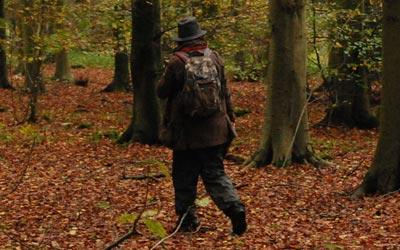 Woodland Surveys