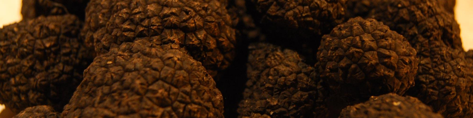 Truffle-And-Mushroom-Hunter-Sustainable-Truffle-Production