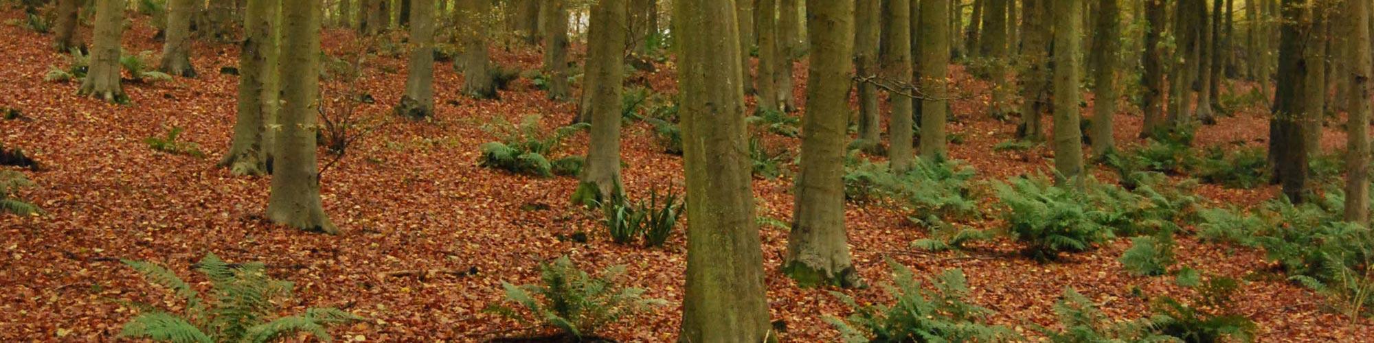 Truffle-And-Mushroom-Hunter-Woodland-Management